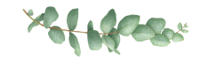 tattly_eucalyptus_cinerea_vincent_jeannerot_00_3000x